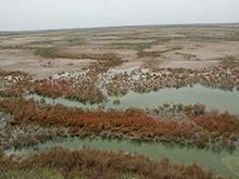 苟池西畔湿地