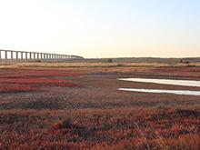 四尔儿滩湿地